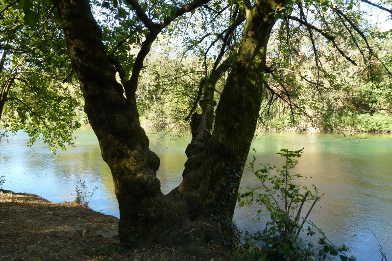 Albero in ombra