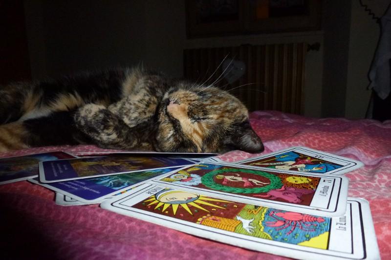 Gatti e Tarocchi